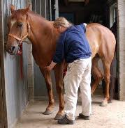 Healing bij paarden